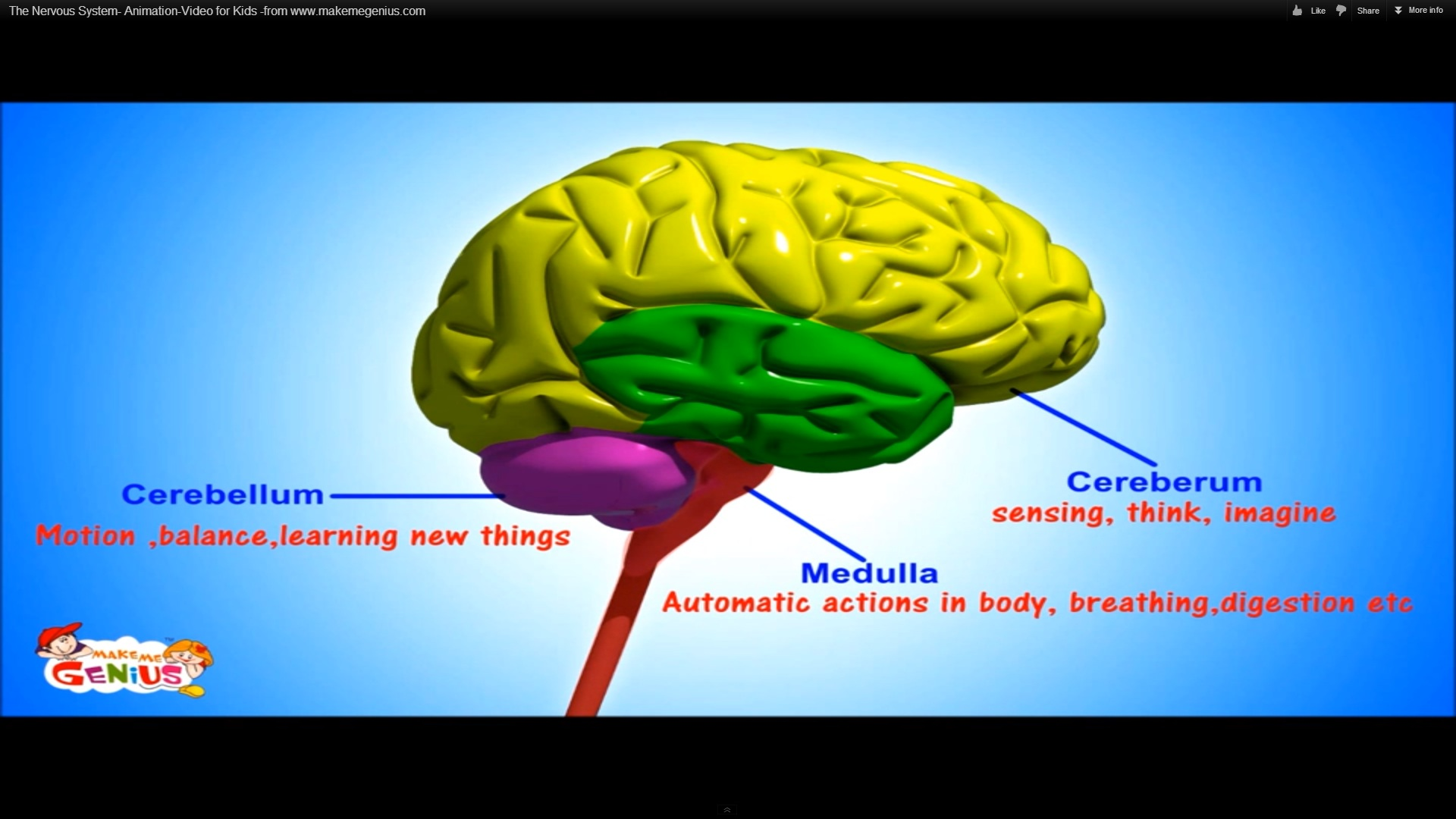 The nervous system animation video for kids the american dream the three major parts of the brain ccuart Choice Image